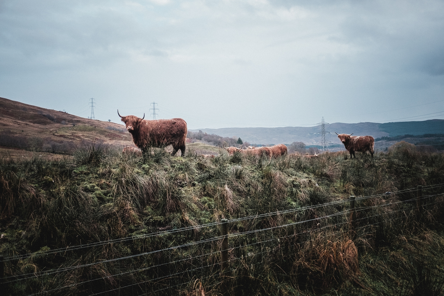 Schottland-79